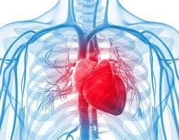 PCCN Practice Questions Cardiac